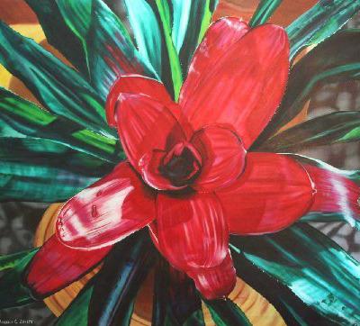 Bromeliad X