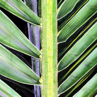 Coconut Palm Frond I