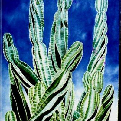 Curly Cactus