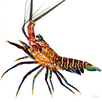 Florida Spiny Lobster
