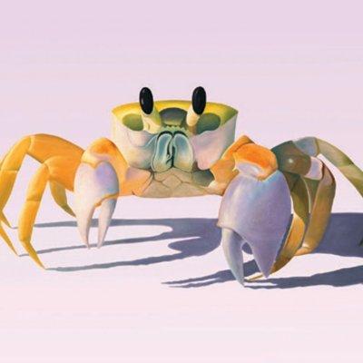 Florida Sand Crab