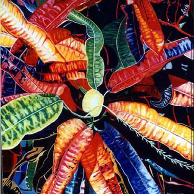Wild Croton